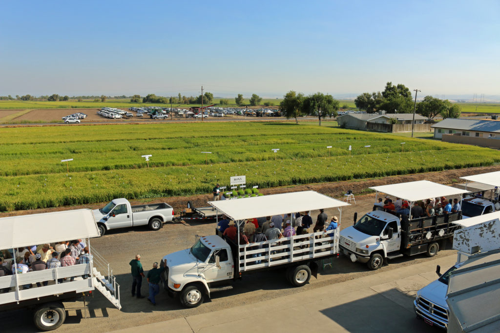 Rice Field Day coming up August 28