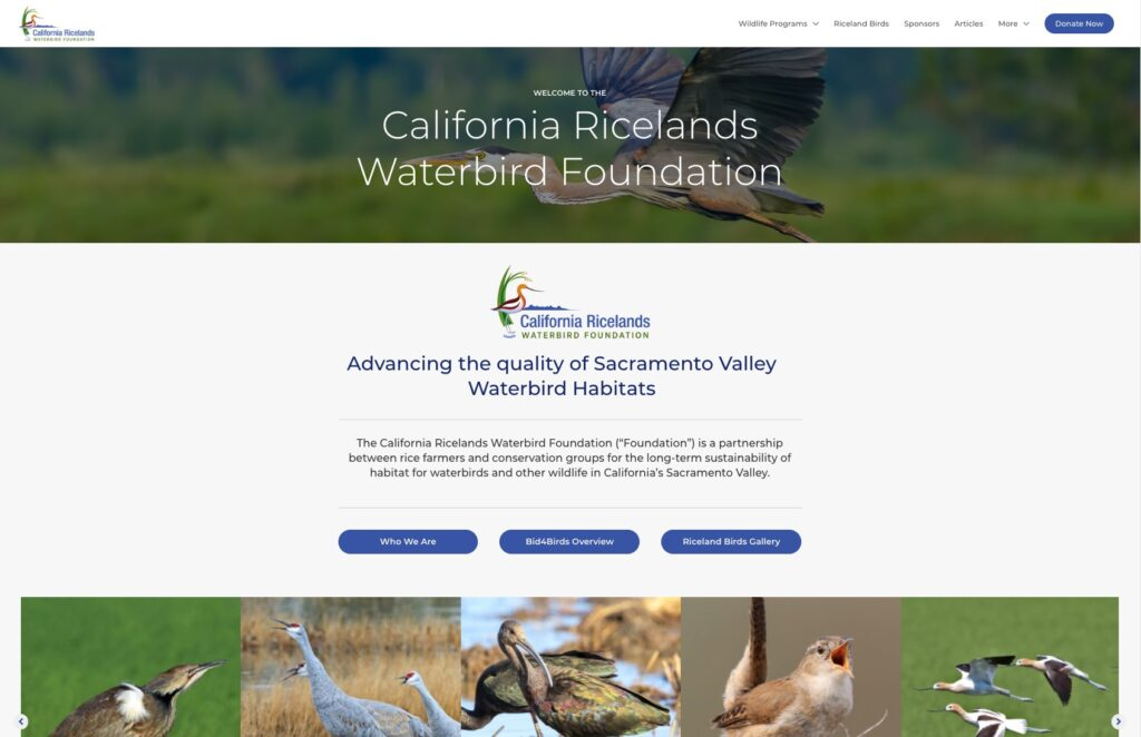 New and Improved Foundation Website